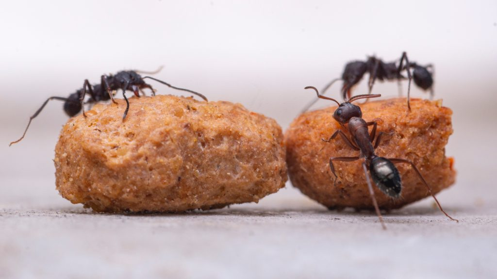 How To Get Rid Of Ants In The Bedroom
